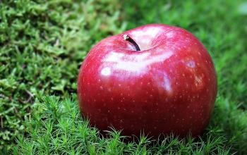 Shallow Focus Photography of Red Apple in Green Grass