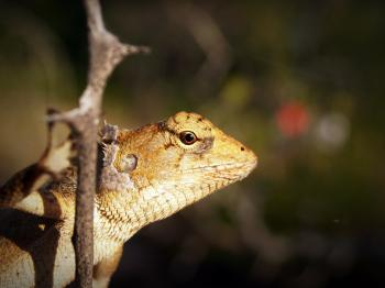 Shallow Focus Photography of Yellow and White Lizard Clinging on Tree Branch
