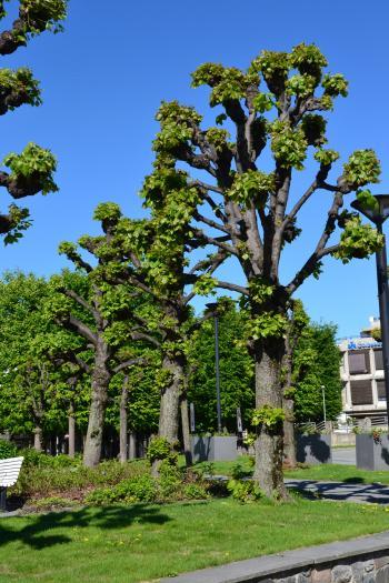 Shaped trees