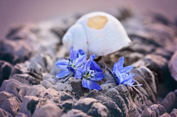 Shell n Flower