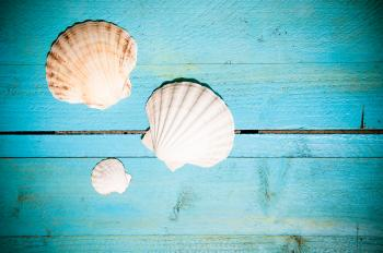 Shells on blue wooden planks