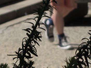 Shoes thru hedge