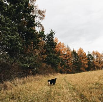 Short-coated Black and White Dog Standing in Forest