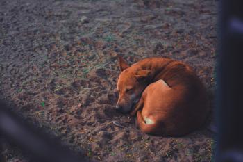 Short-coated Dog Sleeping on Soil Ground at Daytime