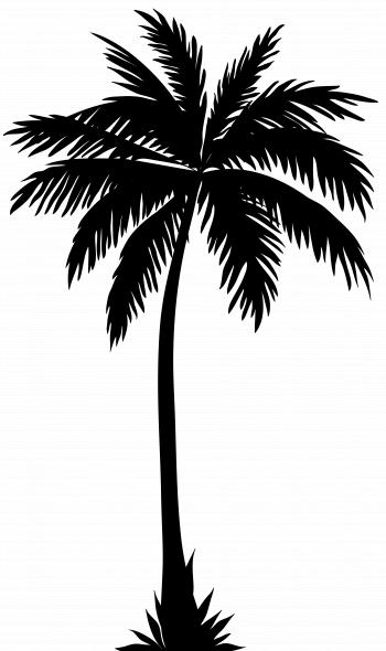Tropical Palms Silhouette