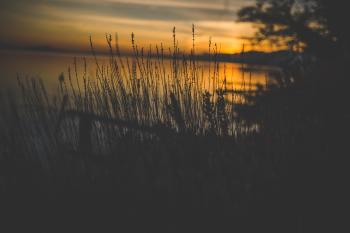 Silhouette of Grass Near Body of Water during Golden Hour