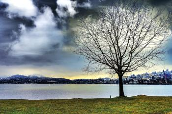 Silhouette of Leafless Tree Beside Water during Cloudy Sky