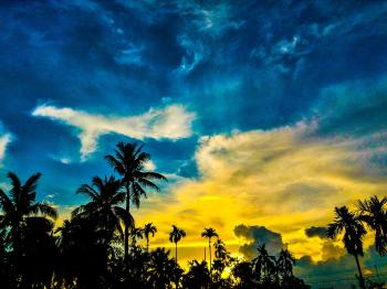 Silhouette of Palm Trees Under Blue and Yellow Sky