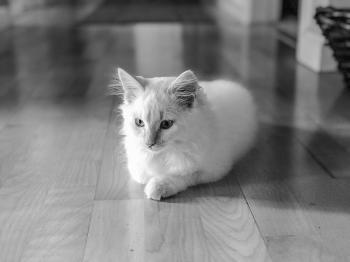 Silhouette Photo of Cat Sitting on Floor
