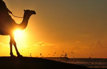 Silhouette Photography Of Man Riding Camel Overseeing Orange Sunset And Flock Of Birds
