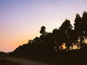 Silhouettes of Tall Trees Near Dirt Road during Sunset