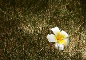 Single White Flower on Grass Background