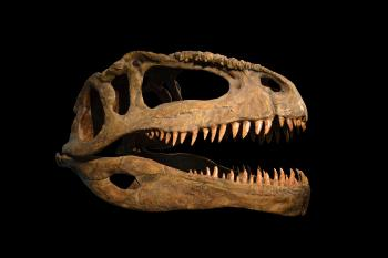 Skull of dinosaur on black background