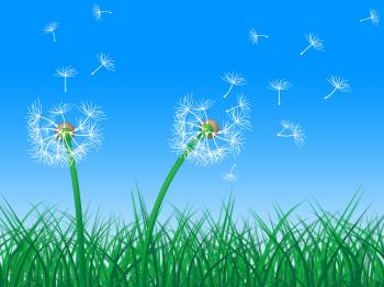 Sky Grass Represents Dandelion Hair And Dandelions