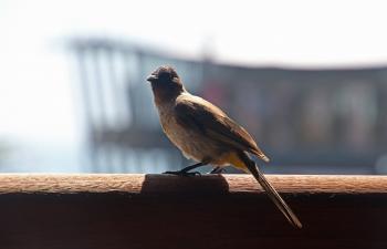 Small bird on the beach pier