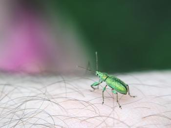 Small insect sitting on an arm