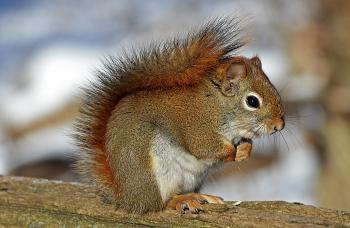 Small Squirrel Standing on Brown Wood