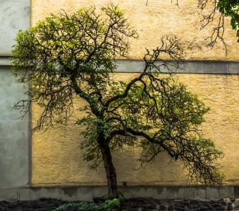 Small tree next to the wall