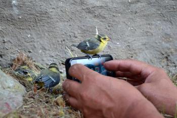 Smartphone and nestling