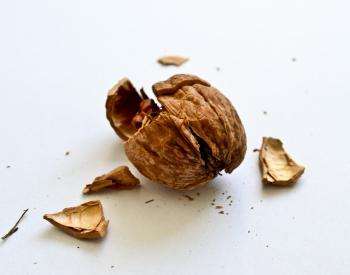 Smashed Walnut