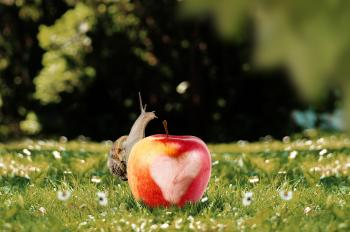 Snail on the Apple