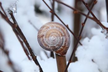 Snail Shell on Brown Tree Branch