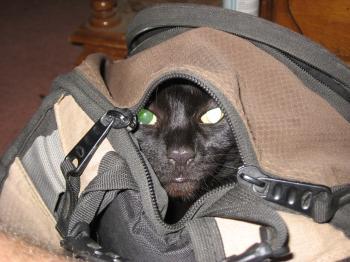 Sneaky Cat!