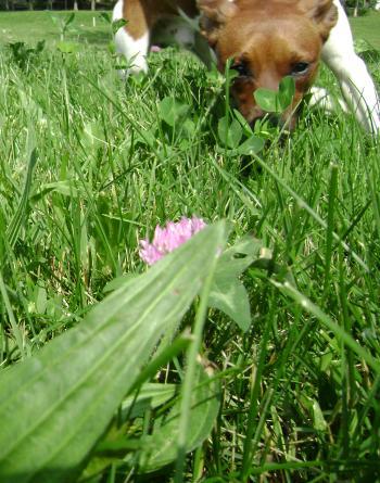 Sniffing around