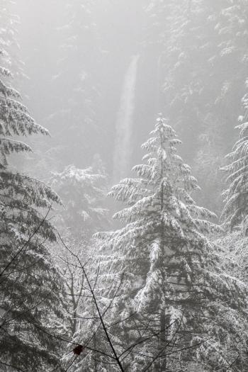 Snow at Silver Falls, Oregon