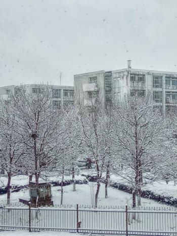Snow Covered Bare Tree Near Buildings