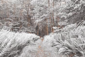 Snow Fern Trail