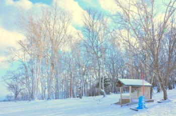 Snow Field Near in Forest