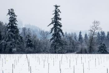 Snow in the Willamette Valley, Oregon