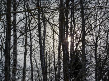 Snowy forst