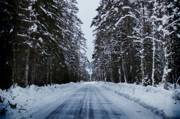 Snowy Road Between Trees