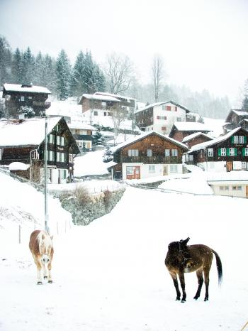 Snowy village and horses