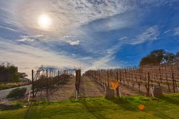Sonoma Valley Vineyard - HDR