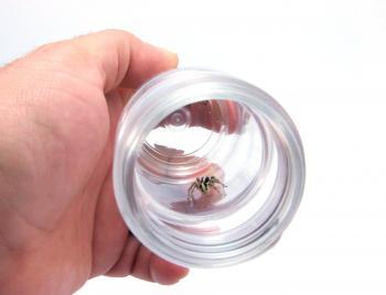 Spider in recipient