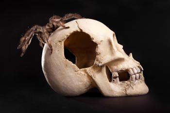 Spider on Human Skull
