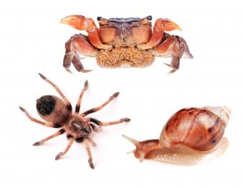 Spider, snail and crab