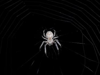 Spinne in der Nacht