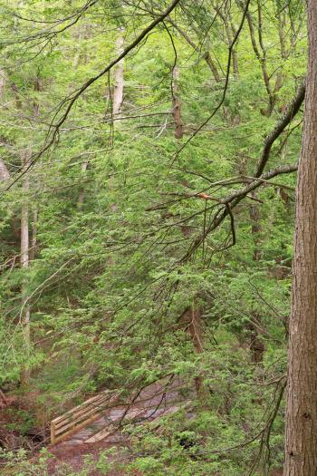 Spring Fresh Forest Vista