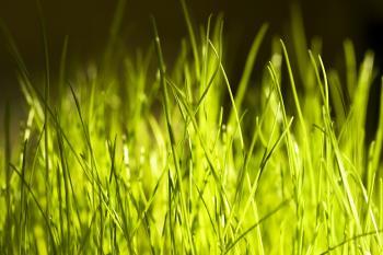 spring green grass