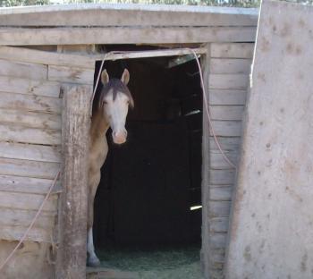 Stallion camera shy