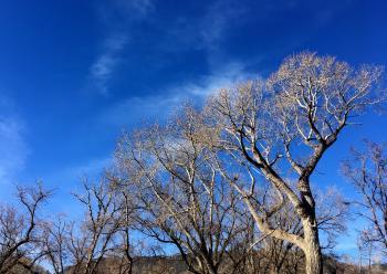 Stock Arizona Sky