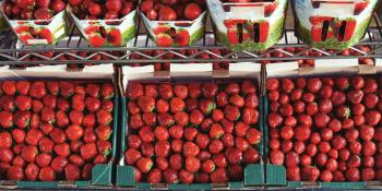 Stock of strawberries