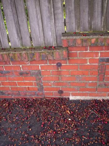 Stoned Brick Wall