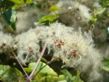 Strange hairy plant