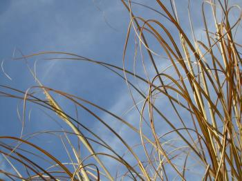 Straws against the sky