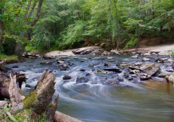 Stream in a Forest With Grey Rocks